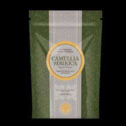 Чай с золотым корнем - Camellia sibirica