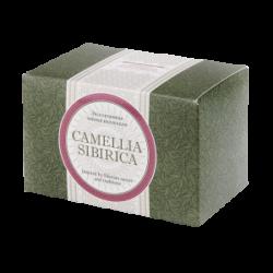 Camellia sibirica