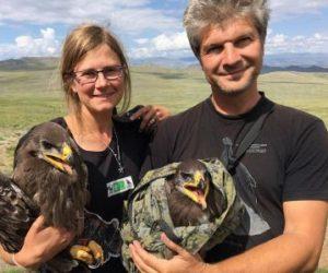 Что грозит степным орлам на зимовке?                               27 мая 2020