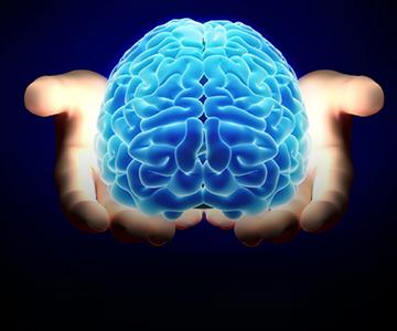 Почему у человека самый умный мозг? 12 октября 2021
